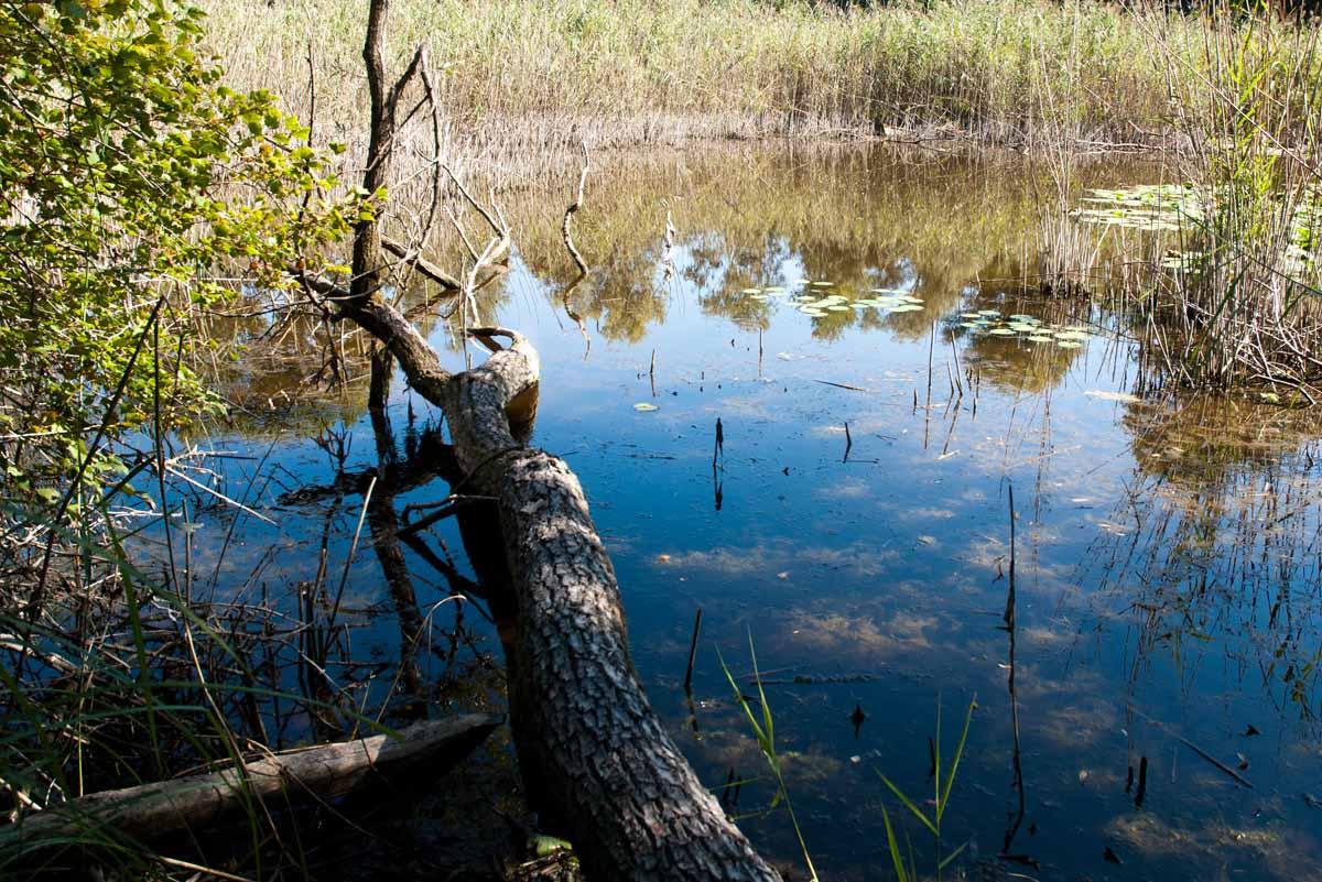 oasi della bruschera