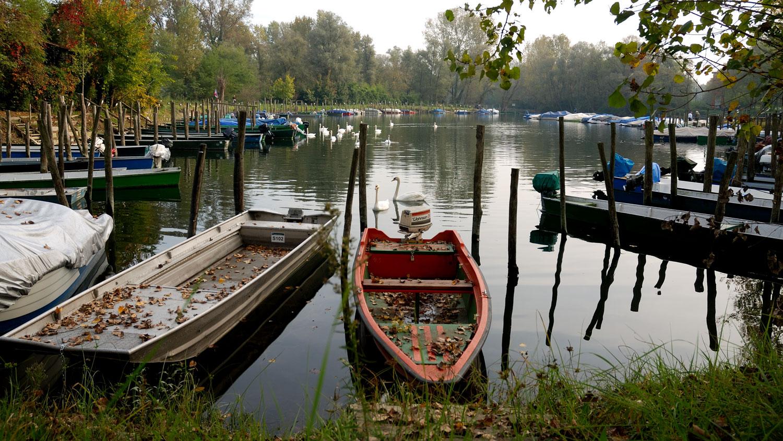 Barche ormeggiate e cigni