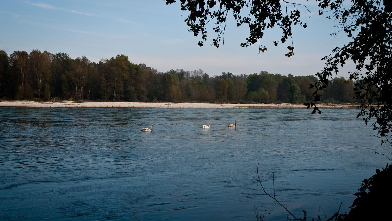il fiume ticino