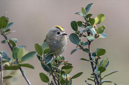 Corso di birdwatching a Lonate Pozzolo