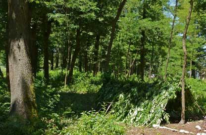 Avventurosamente... costruiamo una capanna nel bosco