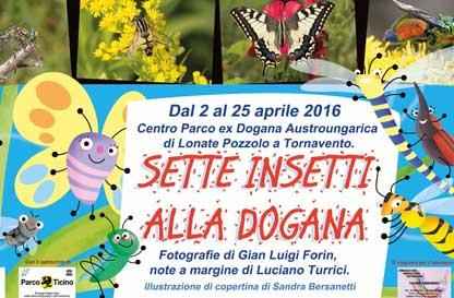 7 insetti alla Dogana