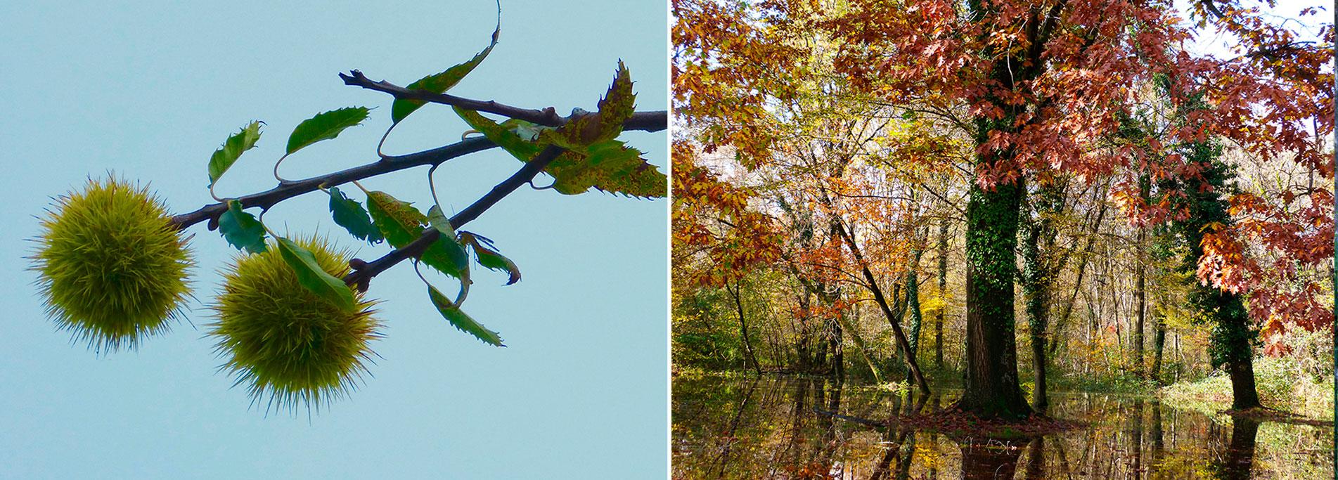 Foliage, collage e...caldarroste