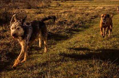Corso di Orienteering con il cane