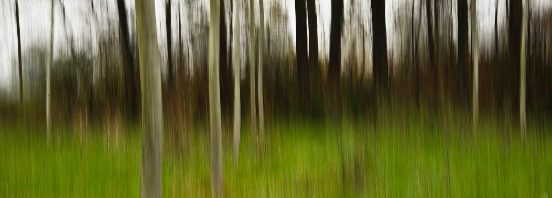 Escursione Fotografica. La Natura e gli alberi della Fagiana