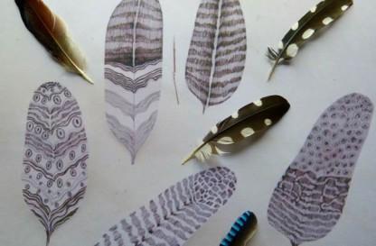 Penne e piume - Riconoscimento degli uccelli del bosco