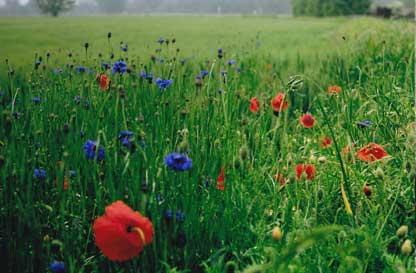 Andar per erbe