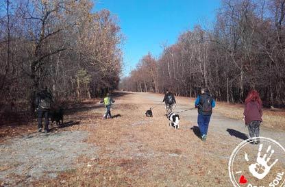 Social Dog Experience parco del ticino