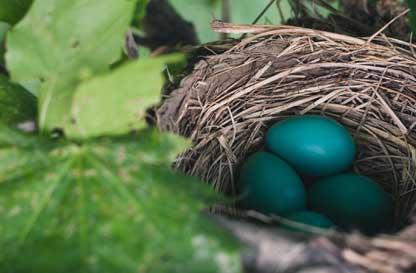 Speciale Pasquetta: a caccia delle uova nel bosco