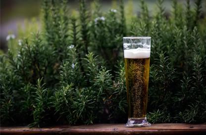 Cotta di birra