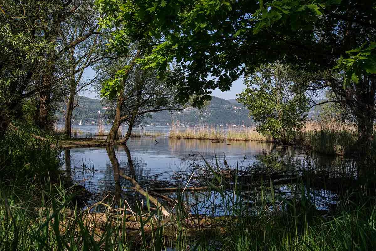 Canneti sul lago