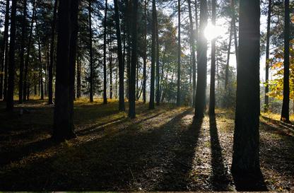 Riserva naturale orientata di Bosco Solivo