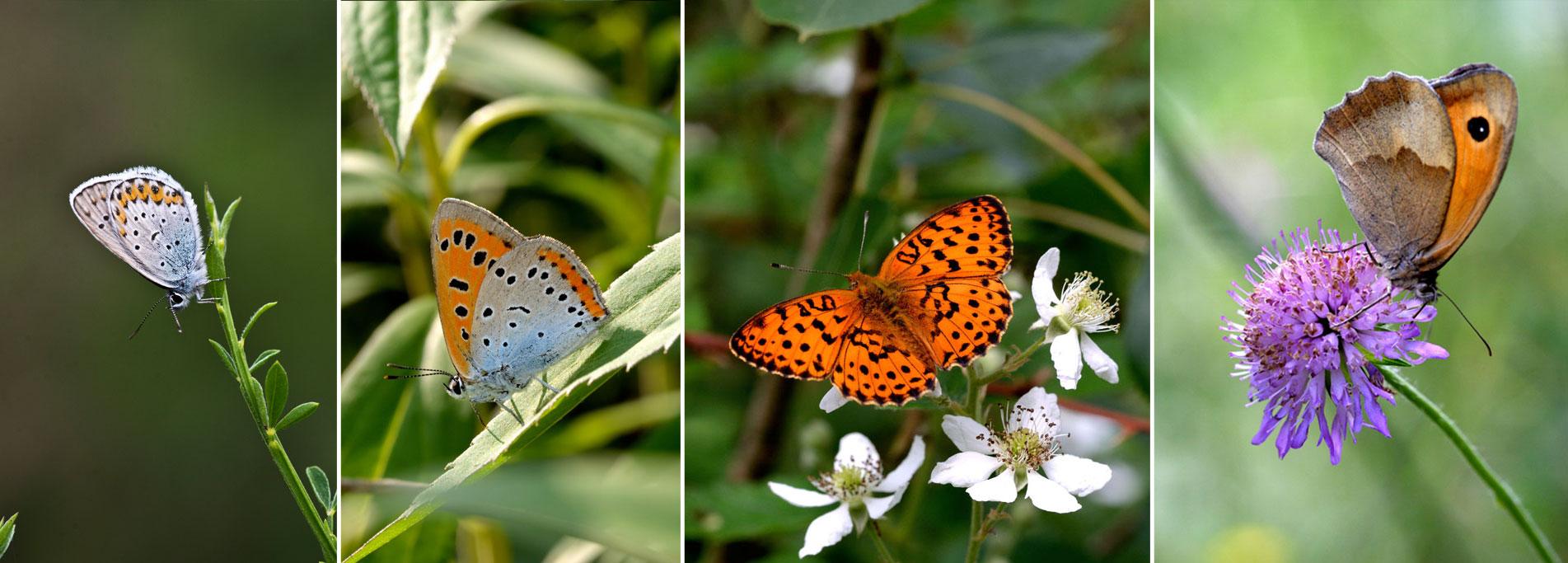 Area didattica / Sentiero delle Farfalle