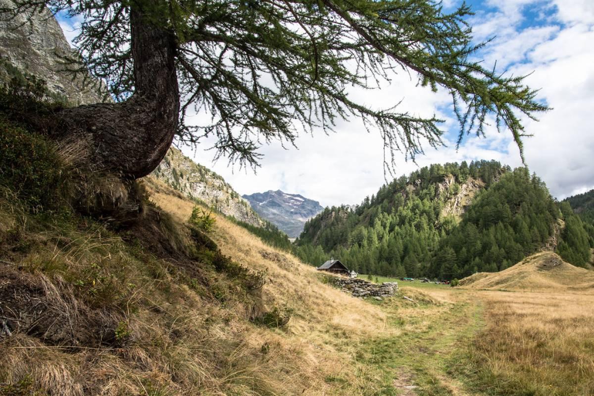 Salendo verso Crampiolo - Alpe Devero