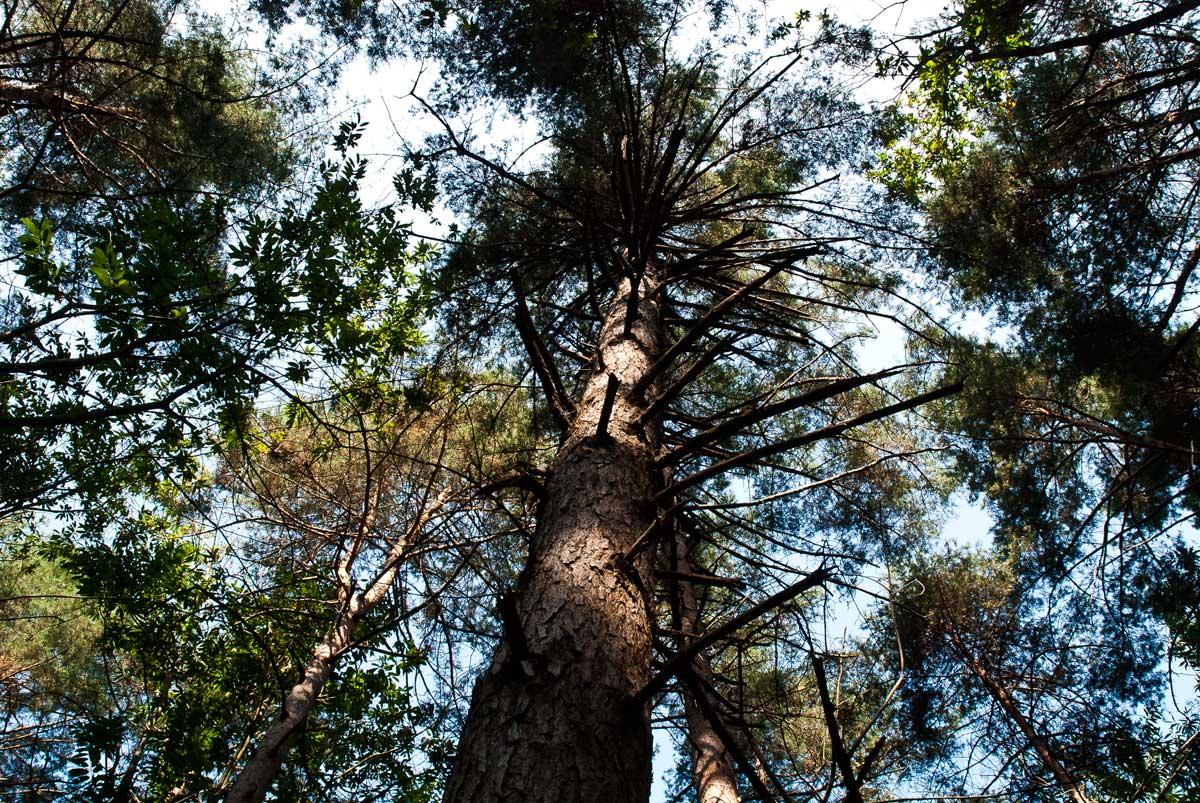 Nei boschi di Oriano Ticino
