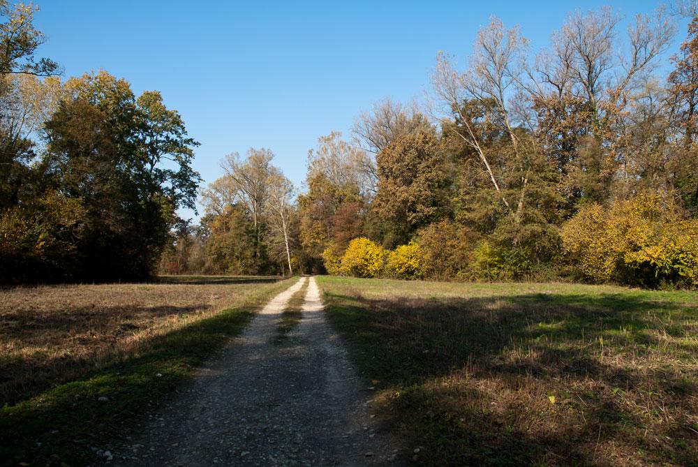 Colori d'autunno - Anello Ronchi - Sentiero delle Farfalle