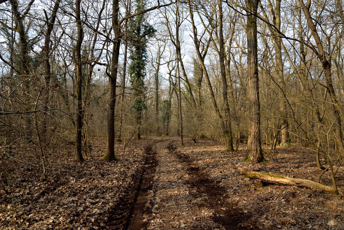 Il bosco - Percorsi al Parco Mandelli