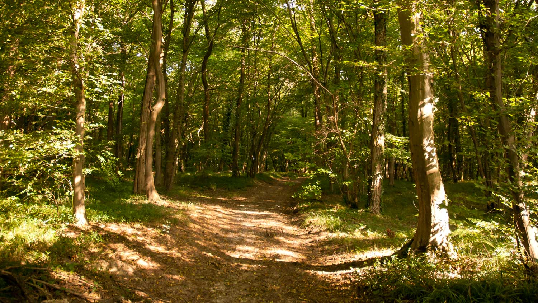 bosco genestre