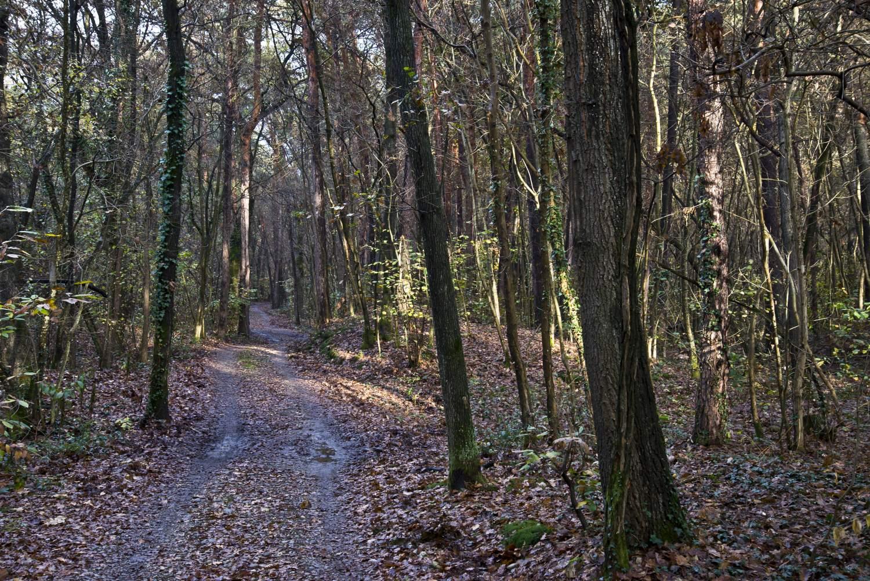 Casone Montelame boschi