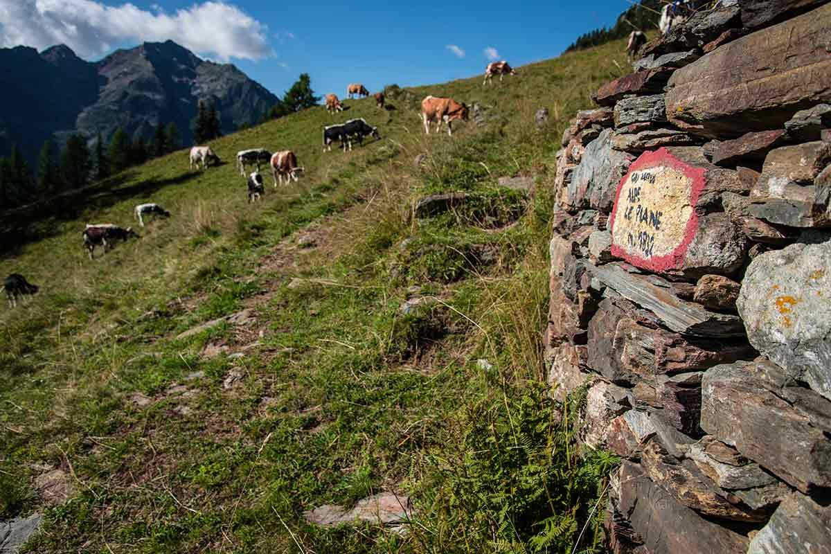 Alpe Le Piane - Cima Mutta - sentiero